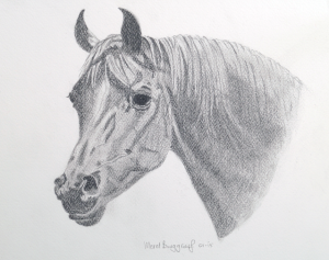 Arabian Horse - Merel Burggraaf