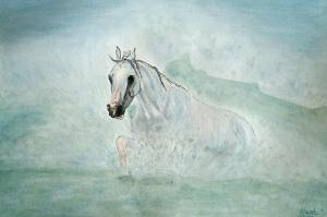 Arabian Sea Horse