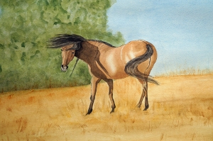 Basking Mustang