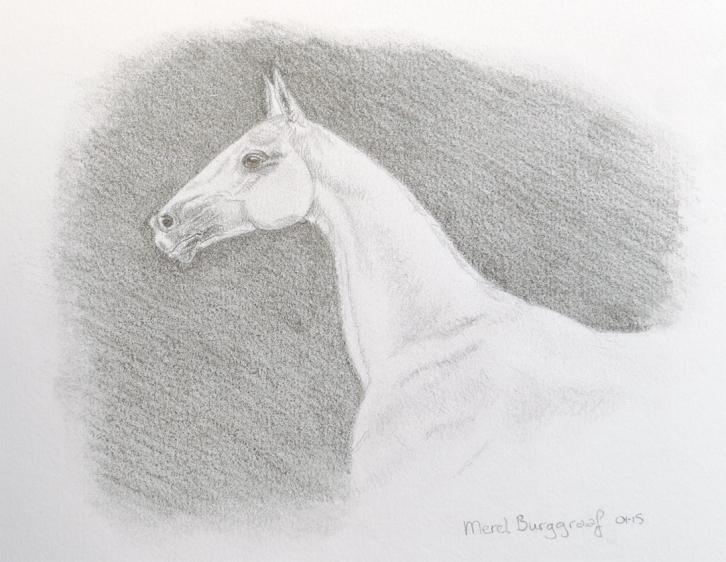 Akhal-Tèke - Horse of the Desert