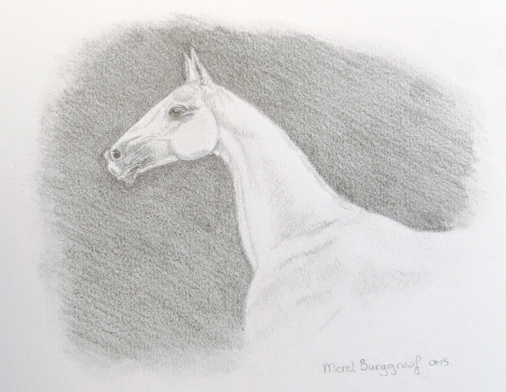 Akhal-Tèke - Horse of the Desert