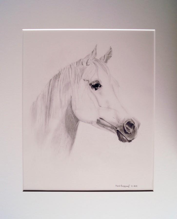 Merel Burggraaf Art paard equine horse painting drawing kunst portret