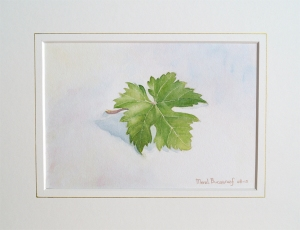 Vine Leaf (water colour on arches 300 gms)