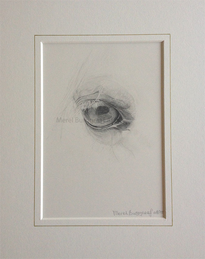 Graphite drawing of a horse's eye
