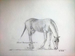 Rough sketch of Serenity the Mustang mare grazing.